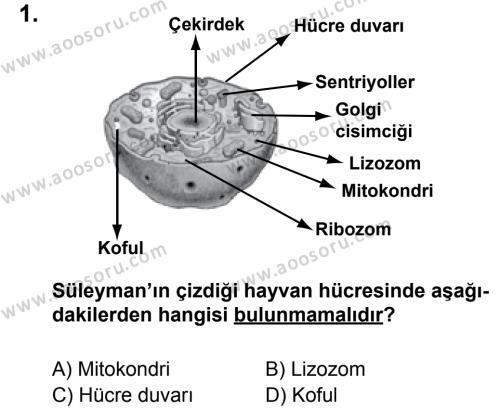 Fen Bilimleri 6 Dersi 2011 - 2012 Yılı 2. Dönem Sınavı 1. Soru